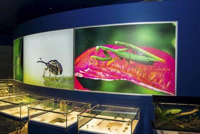 Insectarium de Montreal