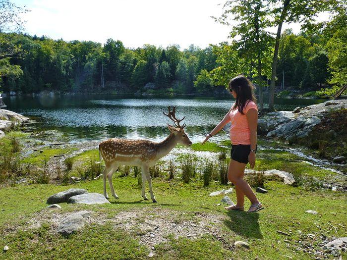 meilleurs parcs zoologiques de Montreal
